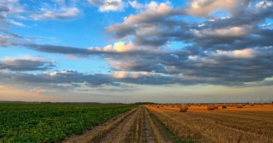 Progetto europeo BioEnergy Farm 2: energia sostenibile per le piccole aziende agricole